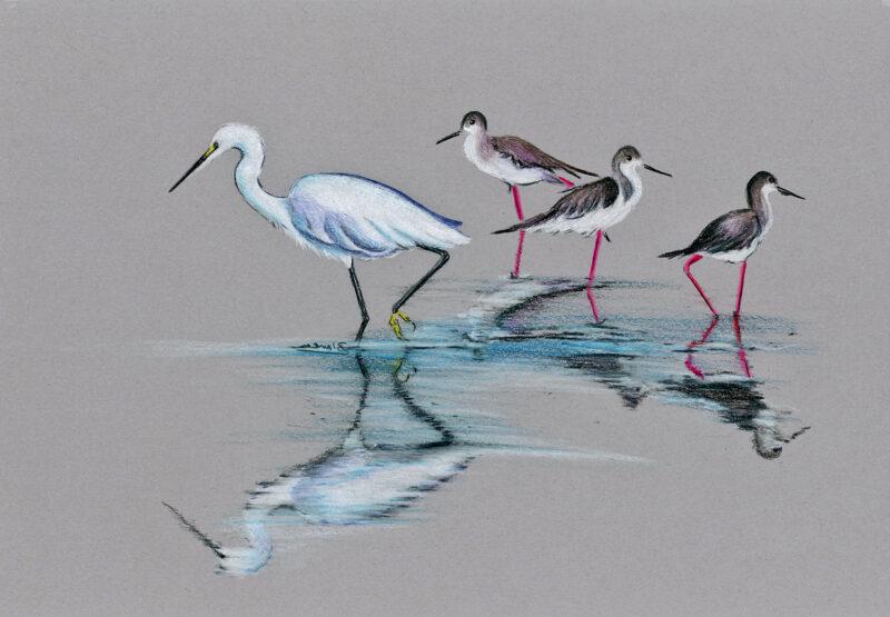 Birds – colored pencils