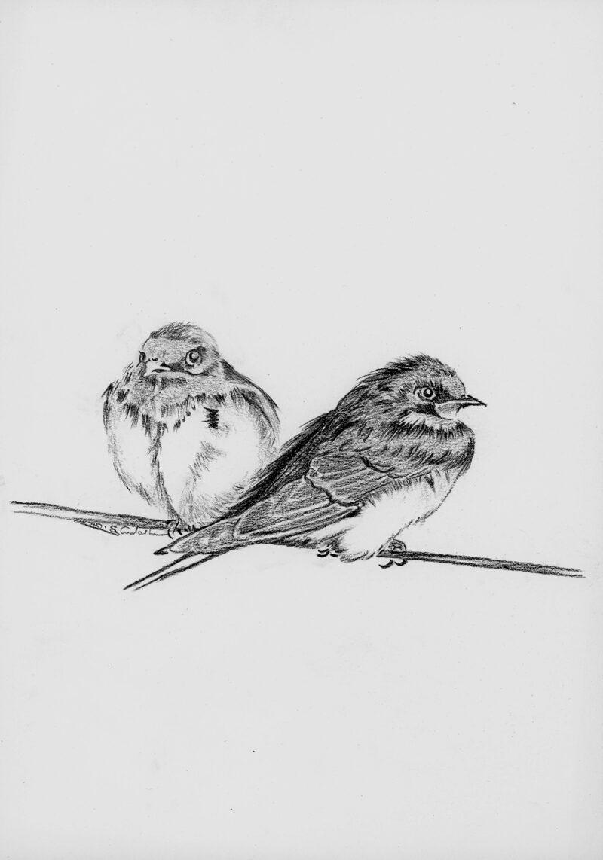 Sparrows – graphite