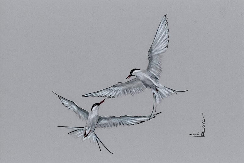 Terns in flight – mixed media