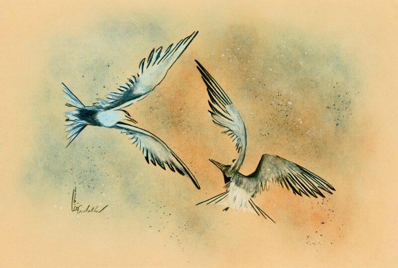 Terns – mixed media