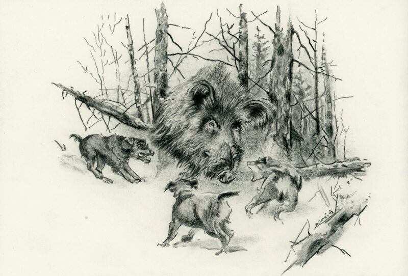 Wild boar and dogs in the forest – pitt pencil