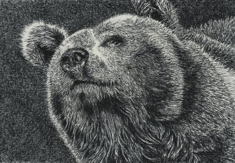 Bear – charcoal