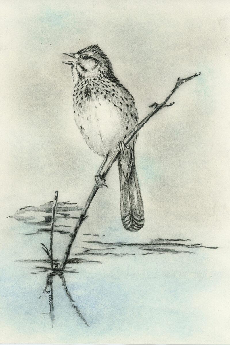 Bird – mixed media