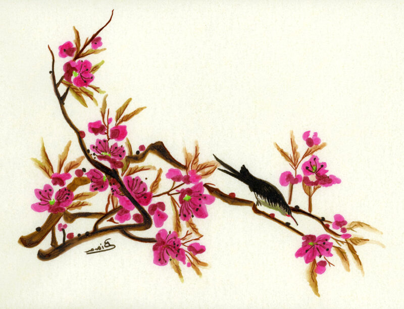 Cherry blossoms – india ink