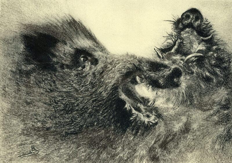 Boars – pitt pencil