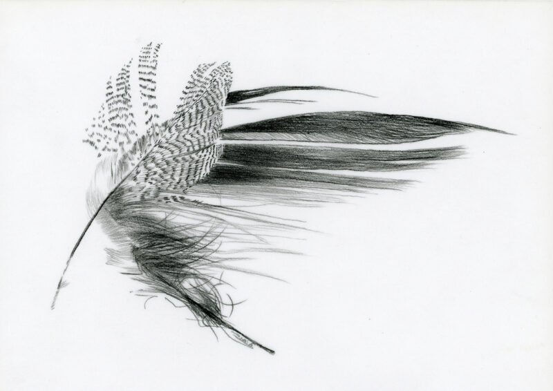 Feather – pitt pencil
