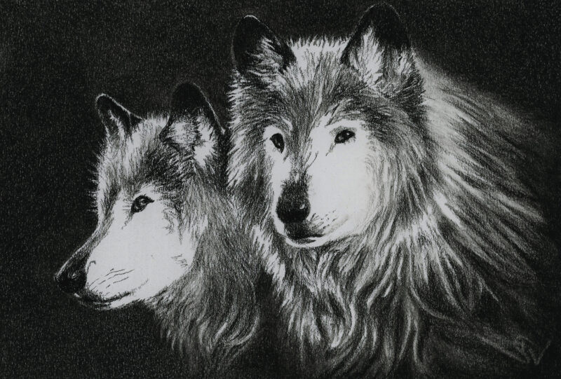 Wolves – charcoal