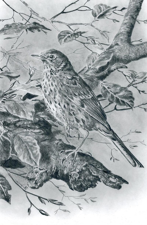 Bird – graphite