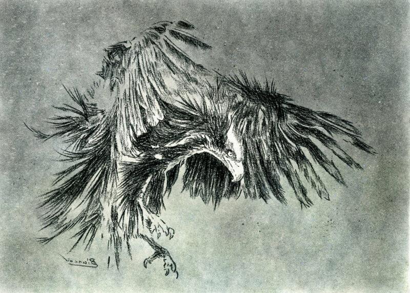 Bird of prey – mixed media