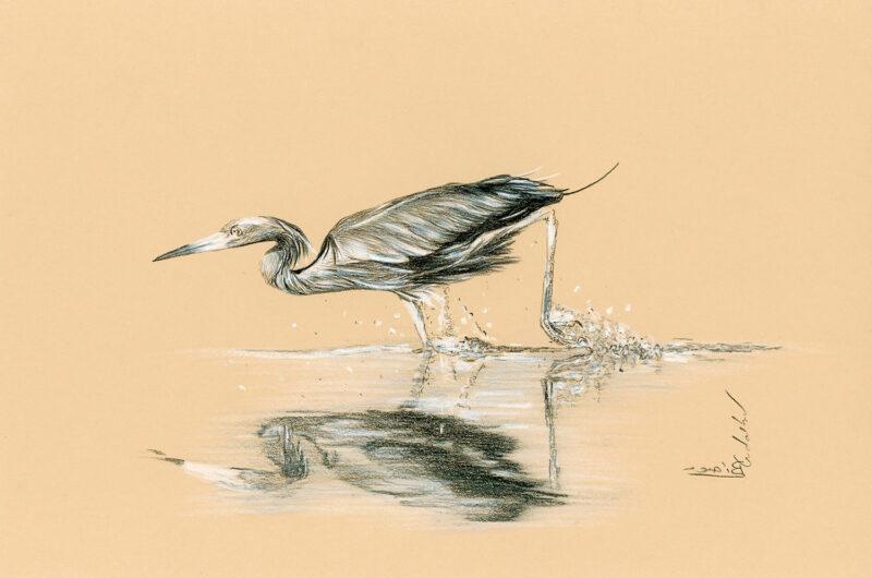 Grey heron – pencils