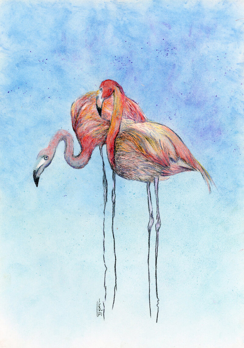 Lovely flamingos – colored pencils