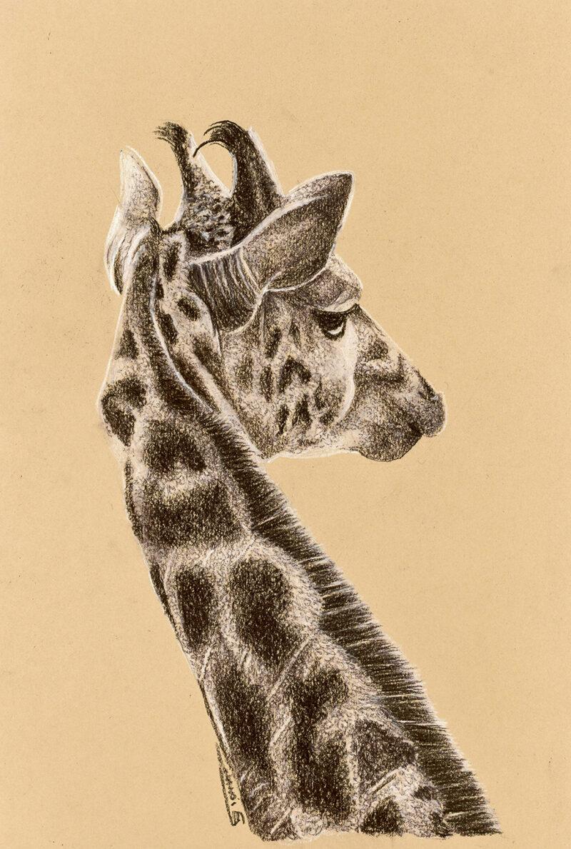 Giraffe – mixed media