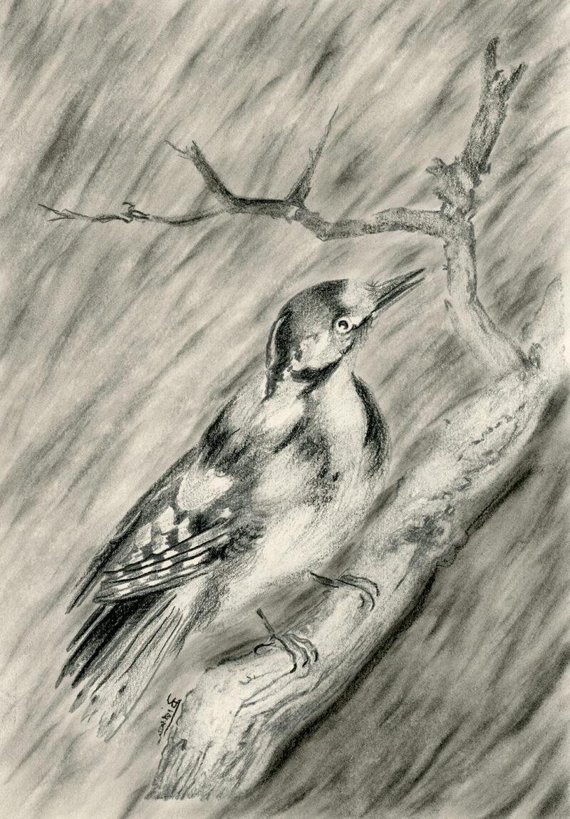 Woodpecker – pitt pencil
