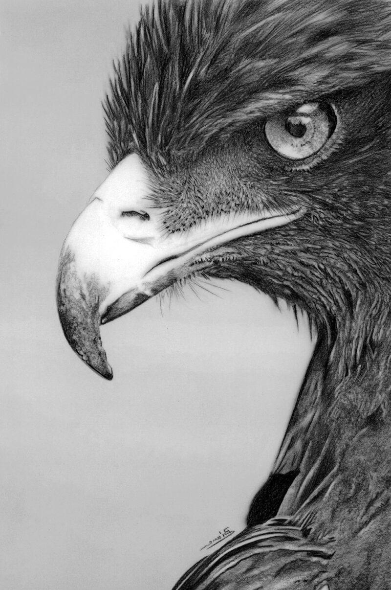 Bird of prey – pitt pencil